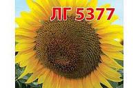 Насiння соняшника ЛГ 5377 Лiмагрейн