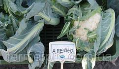 Насіння цвітної капусти Амеріго F1 \ Amerigo F1 2500 насінин Syngenta