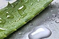 100%  натуральный сок и свежий  лист Алое Вера с органических плантаций Santaverde!