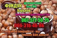 Орех фундук неочищенный в скорлупе урожай 2017 1