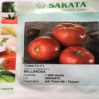 Семена томата Белла Роса F1/SAKATA, 1000 сем. - детерминантный, салатный, крупноплодный