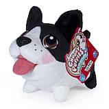 Spin Master Мягкая игрушка Chubby Puppies - Бостон-Терьер, фото 3
