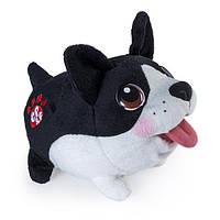 Spin Master Мягкая игрушка Chubby Puppies - Бостон-Терьер