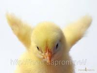 Повнораціонний збалансований корм для для тварин та домашньої птиці ТМ Фідлайф