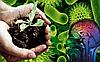 Жизнь в почве. Среда обитания и функции бактерий.
