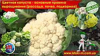 Цветная капуста - основные правила выращивания (рассада, почва, подкормка, болезни)