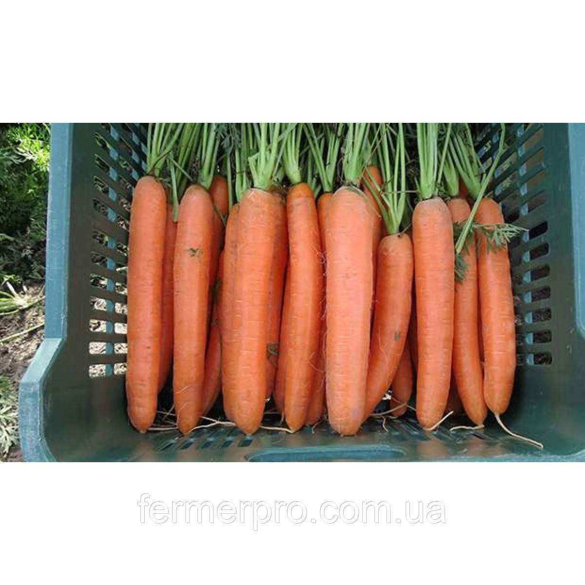 Семена моркови Дордонь F1 (фракция 1.6+ мм) 100000 семян Syngenta