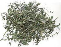 Мята лист садовая Египет