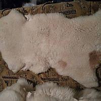 Овечья шкура натуральная. Короткий ворс,густой 85*60 см ворс 5 см с пятнышком