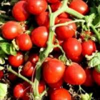 Семена помидора Бриксол F1  20 шт. детерминантный
