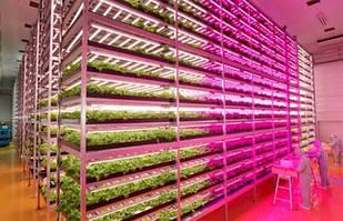 Потребность растений в световом потоке