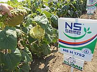 Семена подсолнечника НС Х 1752. Упаковка 1 п.е. (150 000 семян)