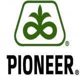 Семена подсолнечника Пионер PR64F50 (ПР64Ф50)