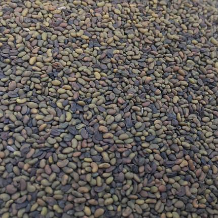 Семена люцерна микрозелень , фото 2