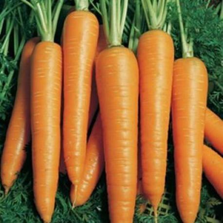 Морква Флакке