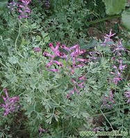 Дымянка лекарственная трава (30гр)