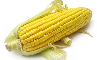Кукуруза Днепровская