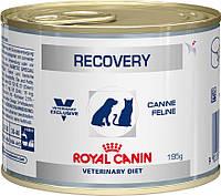 Royal Canin Recovery 6шт*195г-консерва Диета для собак и кошек в восстановительный период после болезни