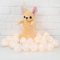Мягкая игрушка Рукавичка для конфет собака Чихуахуа 35см (295)
