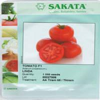 Томат Линда F1, 1000 сем.- семена детерминантного, крупноплодного томата
