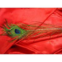 Перо павлина (80 см)(100шт/уп)