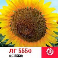 ЛГ 5550 Лимагрейн семена подсолнечника