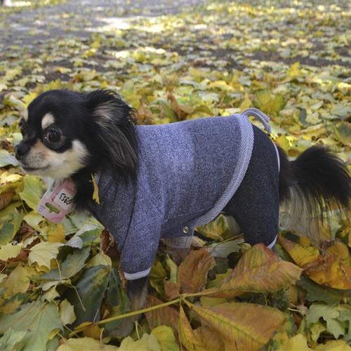 Костюм Pet Fashion Гранд S (27-30см) для собак