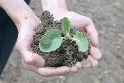 Микроудобрения «РЕАКОМ» в технологии выращивания сельскохозяйственных культур