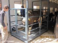 Весы для взвешивания свиней и КРС платформа 2х1.25 м до 3т