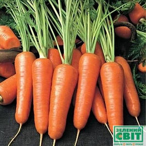 Семена моркови Каскад F1 100000 семян (Бейо / Bejo) - среднепоздний гибрид (130 дней), тип Шантане, фото 2