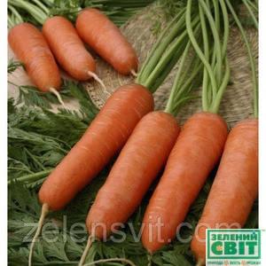 Семена моркови Карини 50 г (Бейо/Bejo) — ранняя сортовая (100 дней), тип Курода, фото 2