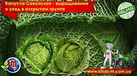Савойская капуста – особенности выращивания и уход в открытом грунте