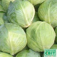 Семена капусты Агрессор F1 (Syngenta) 2500 семян - средне-поздняя (115-120 дней), белокочанная.4,5,6
