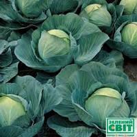 Семена капусты Триперио F1 2500 семян (Syngenta) - средне-спелый гибрид (70-75 дней), белокочанная.