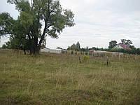 Продам участок 8 соток,селе Андреевка ,Бориспольском районе.
