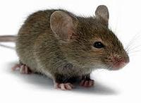 Родентицид/ от мышей Крысолов гранула, 210г (50)