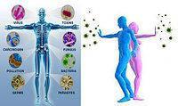 Натуральные препараты для иммунитета (бронхо-легочная система, вирусы, грипп, бронхит, герпес, ЛОР)