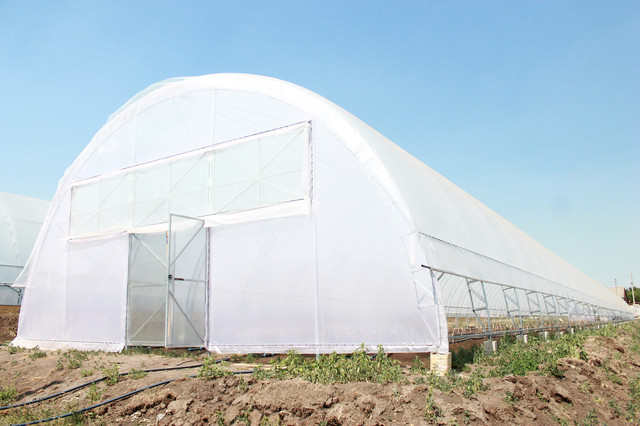 промышленные теплицы под пленку для выращивания томатов