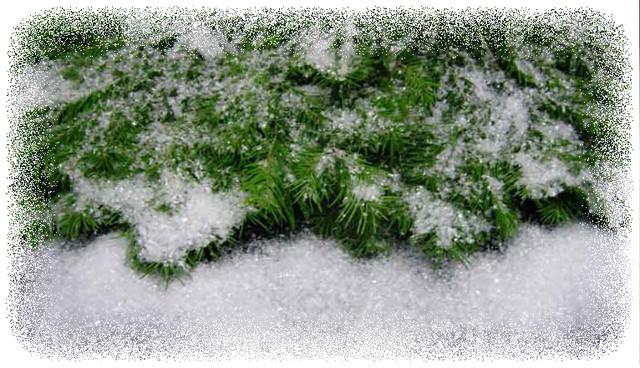 искусственный снег для декора