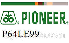 Гибрид подсолнечника Пионер П64ЛЕ99 (Pioneer P64LE99) под гранстар, экспресс