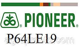 Гибрид подсолнечника Пионер П64ЛЕ19 (Pioneer P64LE19) под гранстар, экспресс