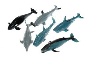 Морские животные Гонконг Тянучка