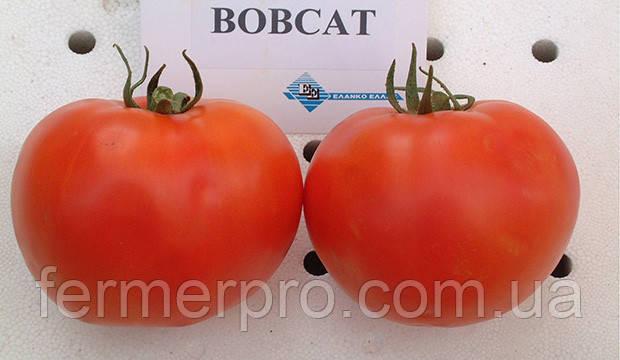 Семена томата Бобкат F1 \ Bobkat F1 1000 семян Syngenta