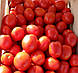 Семена томата Астерикс F1 \ Asteriks F1 25000 семян Syngenta , фото 2