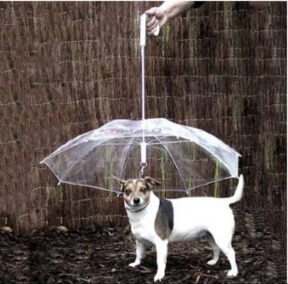 Защитный зонтик от дождя для собак