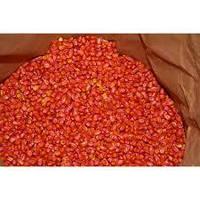 Семена кукурузы (зерно кукурудзи оброблене) Тифенн (Сербия, Нови Сад), 17кг