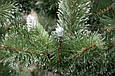 Искусственная новогодняя Ёлка Карпатская с белым кончиком 220см ( ель ) 2.2м елка заснеженная, фото 2
