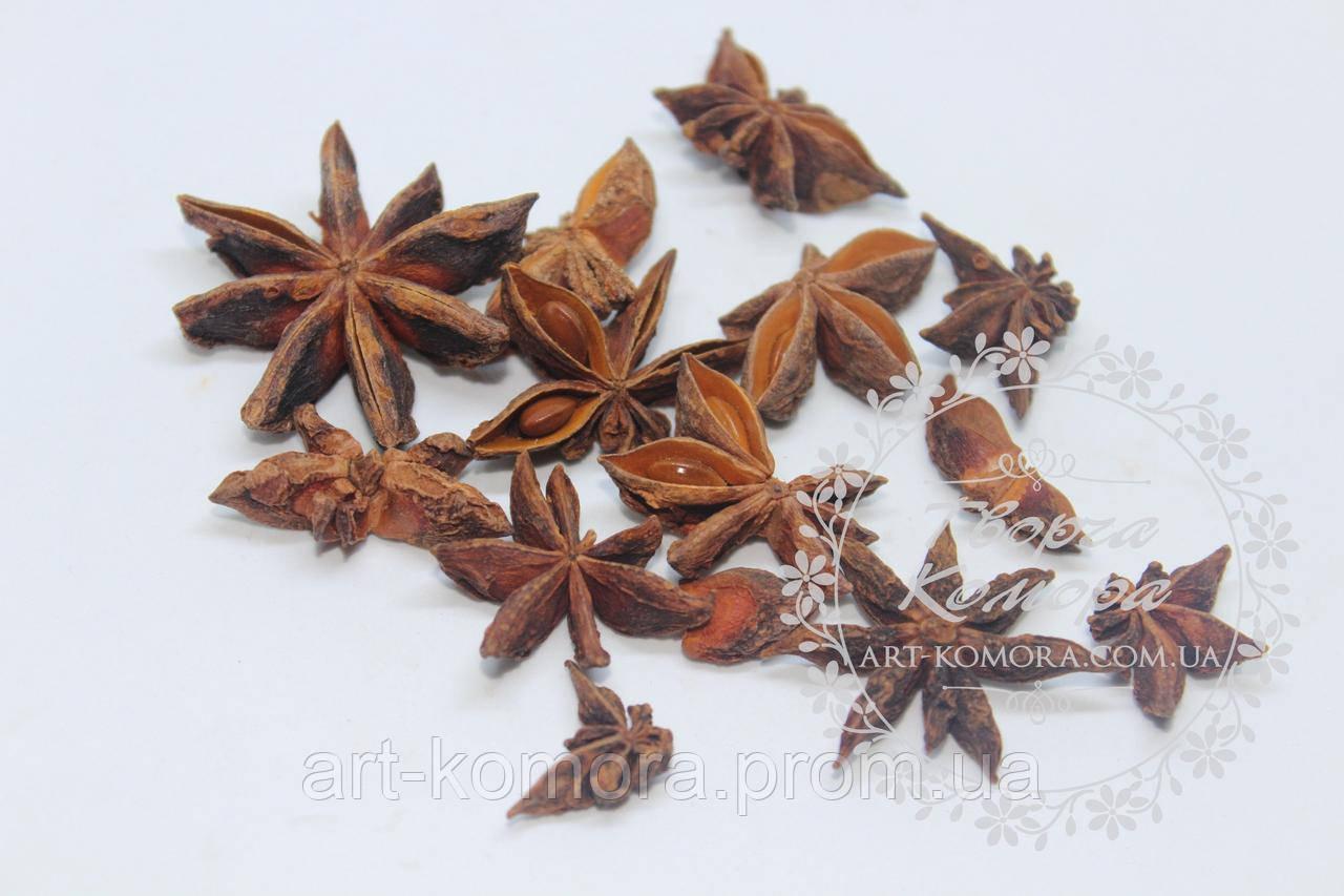 Сухоцвет анис (бадьян). Имеет чудесный аромат.