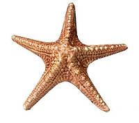 Декорации для аквариума Керамика Звезда  12*5см
