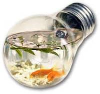 Неприхотливые виды аквариумных рыбок